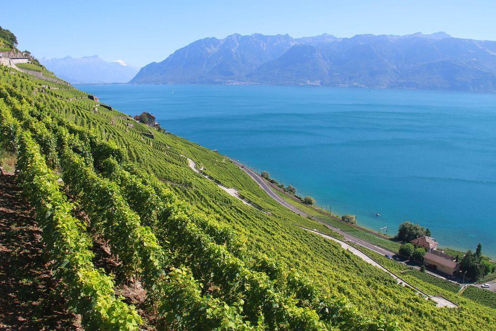 Lavaux-Schweiz-Wein-Weinberge-Urlaub-Ende Sommer-Haustausch